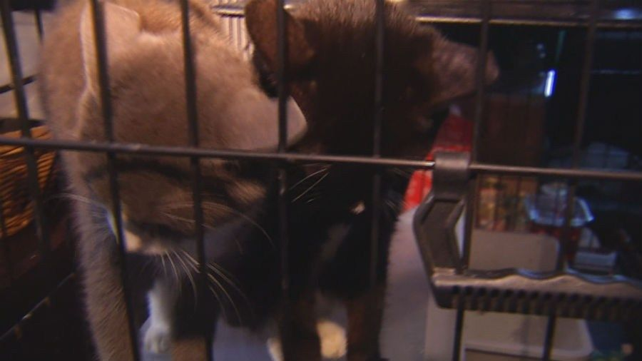 Hedges took in 27 dogs and cats during Florence, housing them in a warehouse in theRosewood community that she was in the process of converting into a shelter. (Source: WNCN)