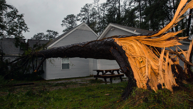 A tree collapsed on the Paradise Point houses during Hurricane Florence on Marine Corps Base Camp Lejeune, N.C., Sept. 15, 2018. (Photo courtesy of U.S. Marine Corps/Lance Cpl. Isaiah Gomez)
