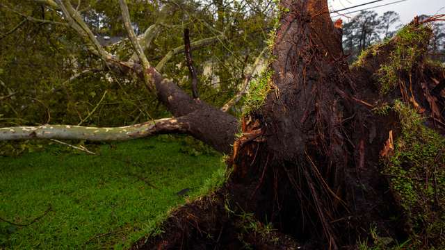 A tree collapsed on power lines at the base housing units during Hurricane Florence on Marine Corps Base Camp Lejeune, N.C., Sept. 15, 2018. (Photo courtesy of U.S. Marine Corps/Lance Cpl. Isaiah Gomez)