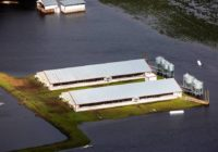 More NC hog lagoons are breached and overflowing as Florence flood waters rise