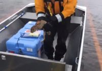 California crew rescues rabbit stranded by Hurricane Florence