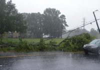How many trees did Florence down in Charlotte? Calls are 'overwhelming,' report says