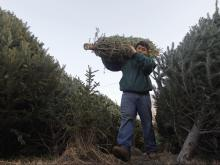 Christmas_Tree_Supply_11426