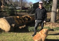 Chainsaw turns Hurricane Michael debris into work of art in Raleigh neighborhood