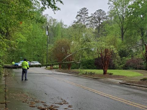 Tree down in Raleigh at White Oak Road and East Lake Drive