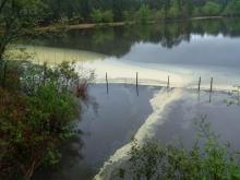 Pollen on pond