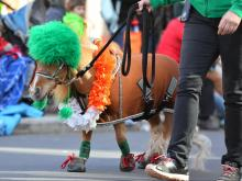 St. Patrick's Day Parade Raleigh (March 16, 2019)