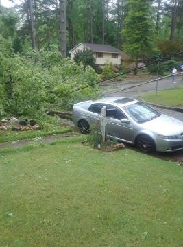 Fallen tree in Raleigh