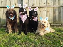 Pets celebrate Easter
