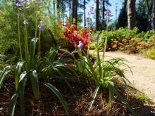 WRAL Azalea Gardens 2019