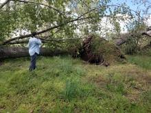 possible tornado damage on ringwood road