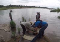 Crews revitalize habitats destroyed after historic Llano River flooding