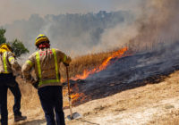 Spanish wildfire erupts after dung pile spontaneously combusts: Investigators