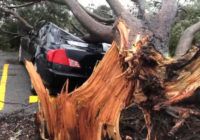 Tree crushes car as Hurricane Barry approaches Louisiana