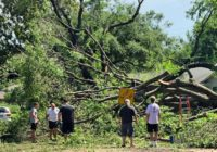 Dallas Developing 'Master Plan' To Plant More Trees After June Storm Damage