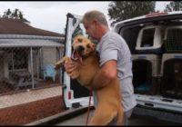 Jacksonville, FL non-profit  relocates dogs, cats to shelters in Georgia, Virginia ahead of Hurricane Dorian