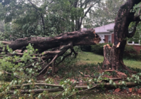 Extensive tree damage in Statesville after severe weather