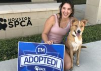 Dog found chained during Imelda flooding has been adopted
