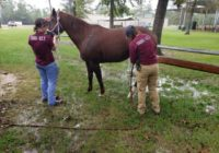 How Texas A&M vets helped save 100 animals after Tropical Storm Imelda