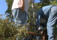 Trees planted at T.B. Lilly Park to replace ones lost during hurricane