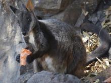 Australia_Wildfires_Wildlife_51485
