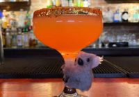 This San Antonio bar is selling a 'Koala Cocktail' to raise money for the Australia wildfires