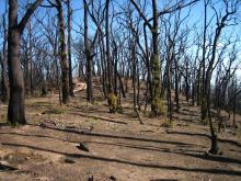 Australia_Wildfires_Burned_Forever_13447