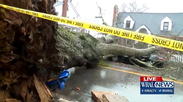 Tree down on Brooks Avenue in Raleigh