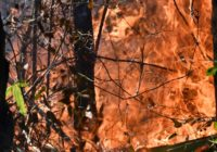 Pender County wildfire has potential to spread