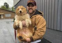 Tennessee family finds dog 54 days after deadly tornadoes