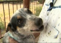 Man reunited with dog he thought had died in California wildfire