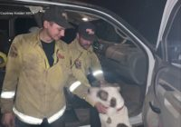 Dog rescued from Northern California wildfire rides co-pilot with firefighters