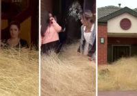 Australian tumbleweeds swamp neighborhood during wind storm: 'It's completely taken over our back yard'