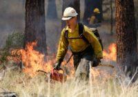 'Nothing looks good' preparing for summer wildfire season