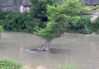 As flooding risk continues, San Antonio-area park officials caution against tubing