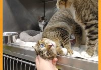 Austin Pets Alive! in need of fosters for pets evacuated from Tropical Storm Ida's path