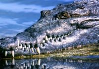 Man attacked by alligator in Hurricane Ida's floodwaters