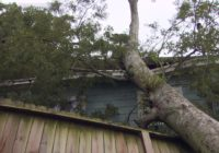 Family safe after tree falls on Kashmere Gardens home during Hurricane Nicholas