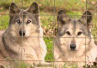 Western NC animal sanctuary hit by flooding denied FEMA funding